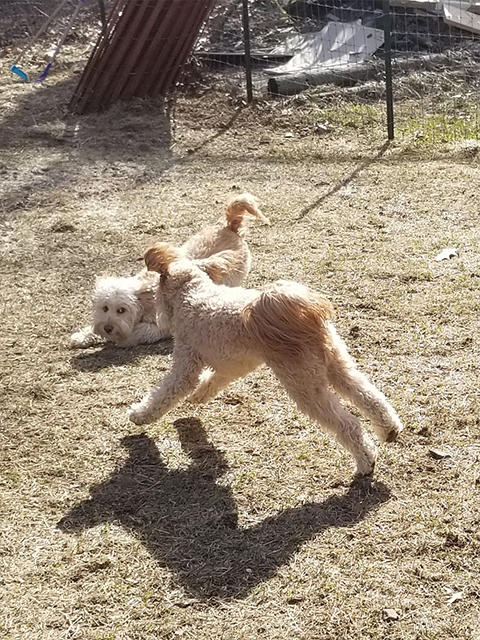 PawsitivelyLove_Dogs_3.jpg