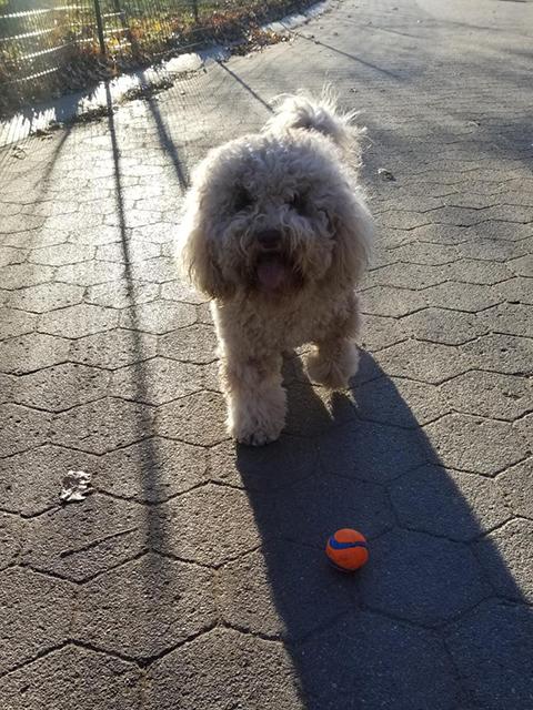 PawsitivelyLove_Dogs_15.jpg