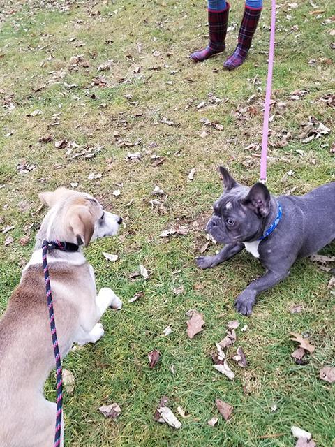 PawsitivelyLove_Dogs_17.jpg