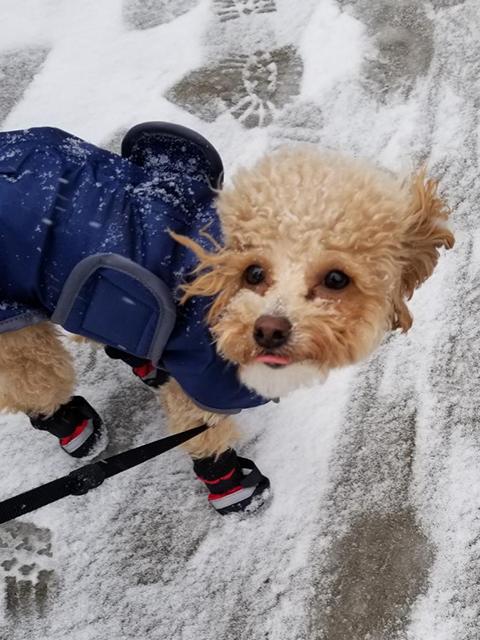 PawsitivelyLove_Dogs_21.jpg