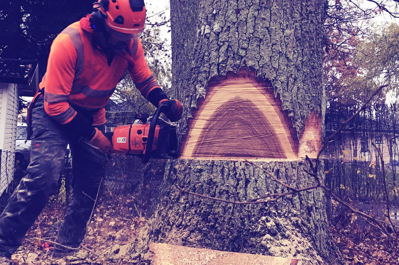 Markfällning - Fällning av träd där hela trädets fulla längd får plats på marken utan risk för egendom eller andra hinder. I baspriset ingår kvistning och kapning av stammen i 3 m bitar och riset läggs på hög.