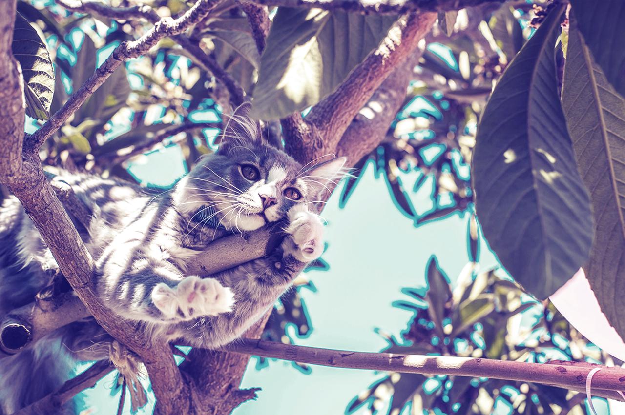 Katträddning - När ni känner att er katt suttit länge nog uppe i ett träd kan vi gå upp och hämta den. Vi går i långsamt upp ovanför katten och sedan får katten följa med i vår ryggsäck ner så att den inte hoppar ut.