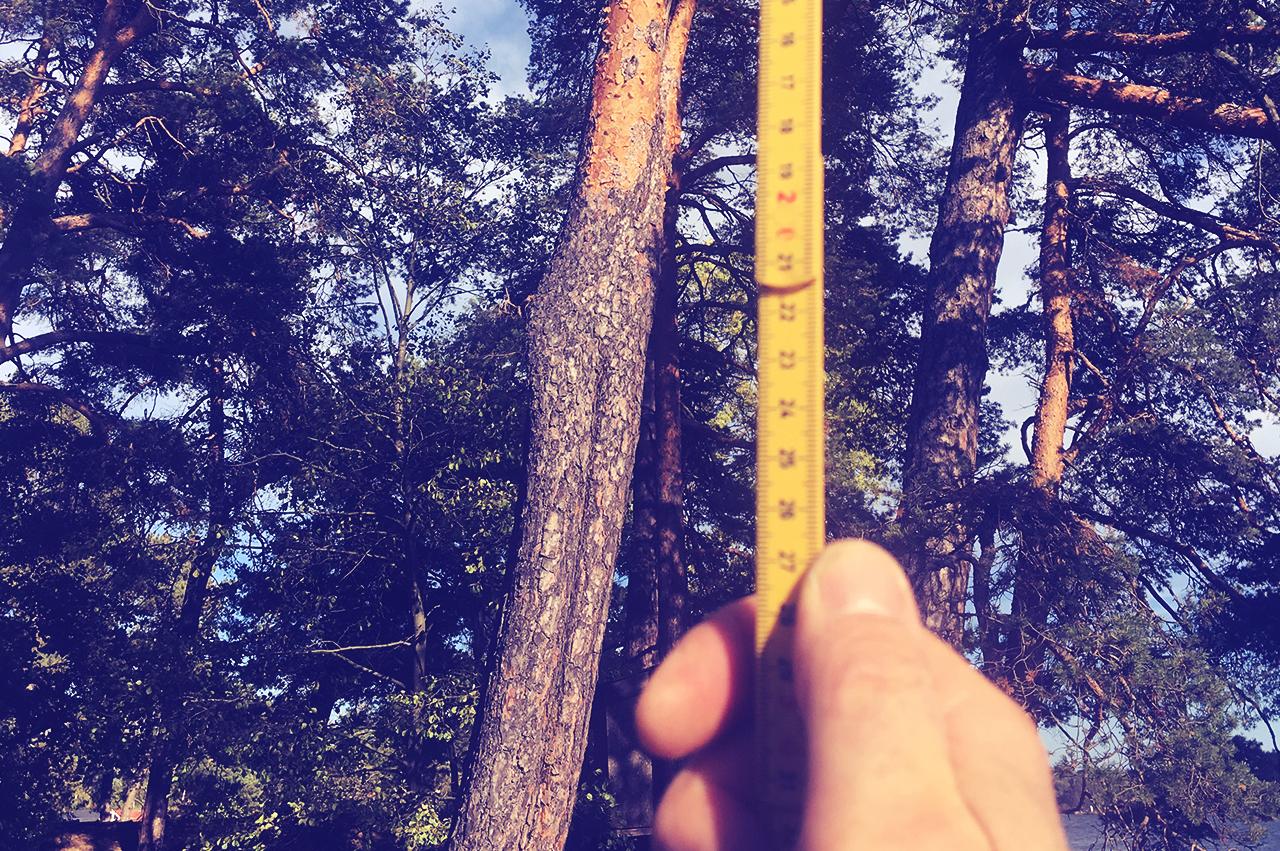 Grundläggande besiktning - Besiktning som innebär okulär besiktning av trädart, stamdiameter, vitalitet, skador samt riskbedömning.