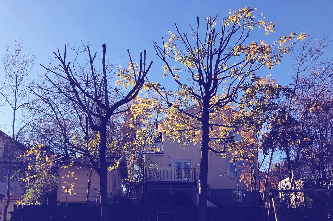 Kronreduktion - Minskning av kronans omfång samtidigt som trädets ursprungliga struktur och karaktär bibehålls.