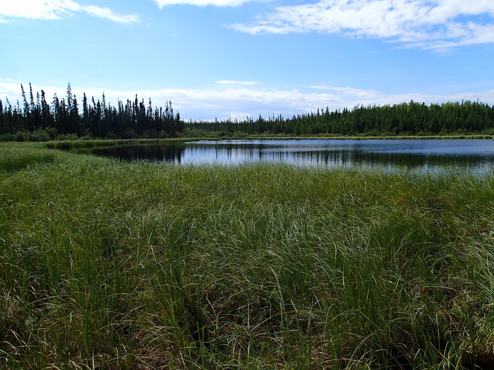 Wetland 2_KA.JPG