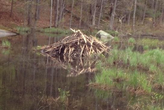Beaver Lodge,  Roxbury NH (Jim Rousmaniere)