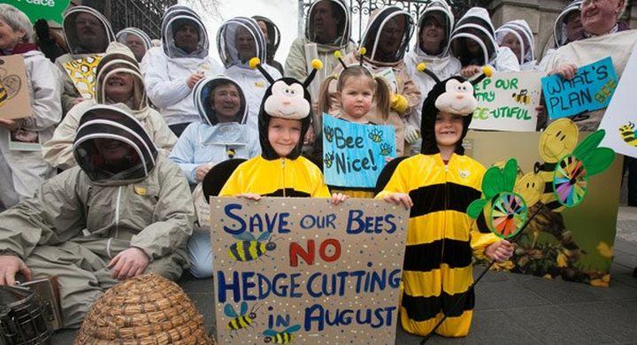 http _www.irishexaminer.com_remote_media.central.ie_media_images_b_BeekeepersIrelandProtest2017_large.jpg width=648&s=ie-449016.jpg