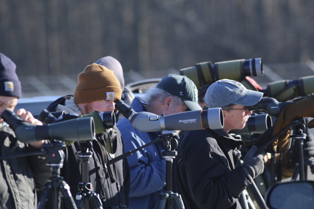 Birding is social. Birders above chased a rare Gull in Southern Michigan.