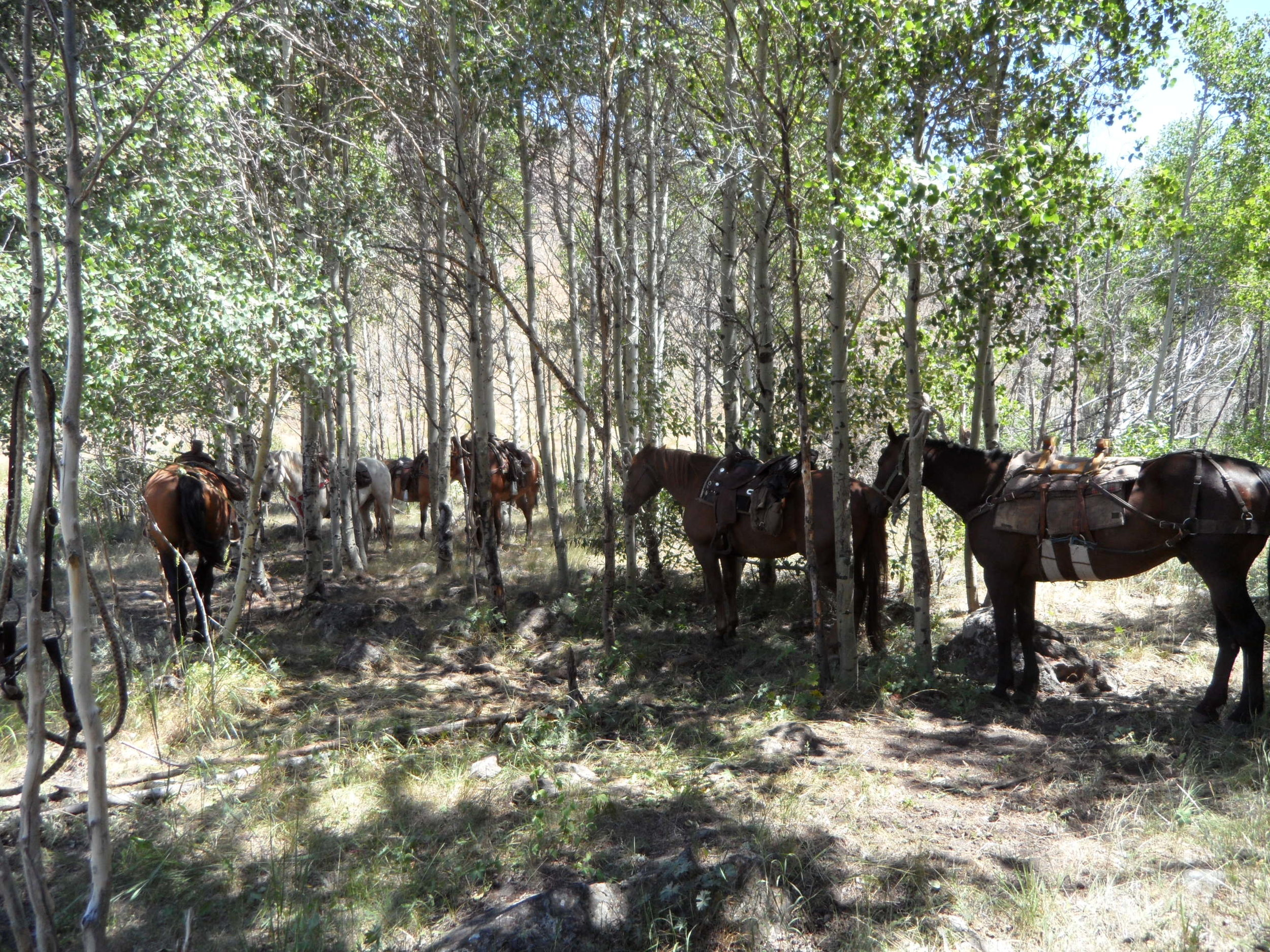 The Roses' Guest Horses (NV015)