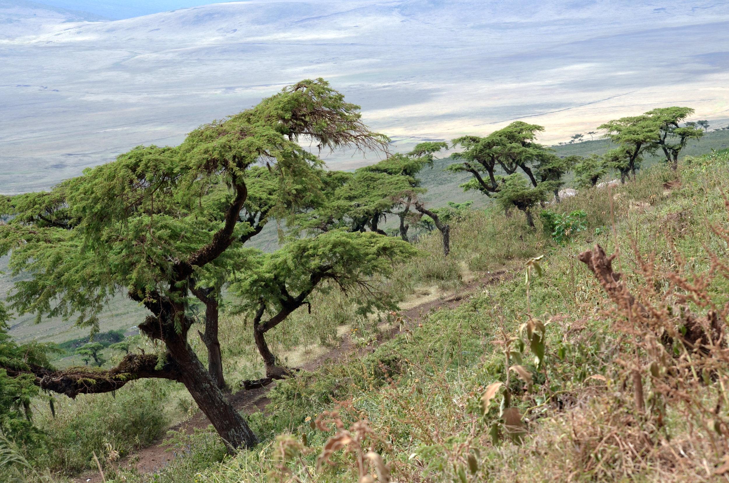 Iyeala's gravesite on the rim of the Ngorongoro Crater.JPG