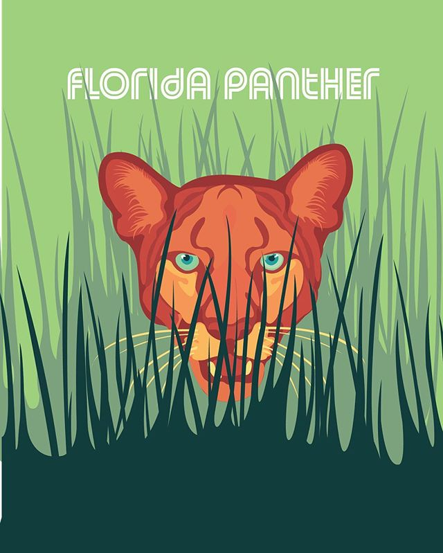 Today we highlight: the Florida panther A descendant of pumas, the Florida panther (Puma concolor cougar) has been reduced to 5% of its original historical range and is now primarily found in South Florida.  Be sure to follow along with our endangered species prompt list all of May! • • • • #illresearch #illustratedscience #environment #climatechange #history #zine #sciartist #webcomic #scicomm #scienceillustration #marinebiology #sciart #molecularbiology #cellularbiology #wildlifeconservation #naturalhistory #herpetology #herpetologist #amphibians #climatescience #sealevelrise #scientificillustration #entomology
