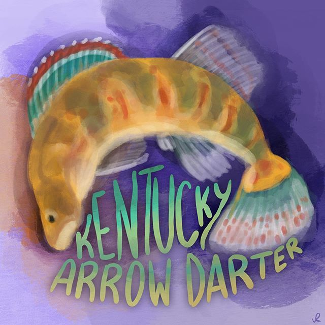 The Kentucky arrow darter is one of four endangered fish species that we are highlighting this month. What are some of the endangered fish you know about or research? Illustration by: @jessikaarts • • • • #illresearch #illustratedscience #environment #climatechange #history #zine #sciartist #webcomic #scicomm #scienceillustration #marinebiology #sciart #molecularbiology #cellularbiology #wildlifeconservation #naturalhistory #herpetology #herpetologist #amphibians #climatescience #sealevelrise #scientificillustration #entomology
