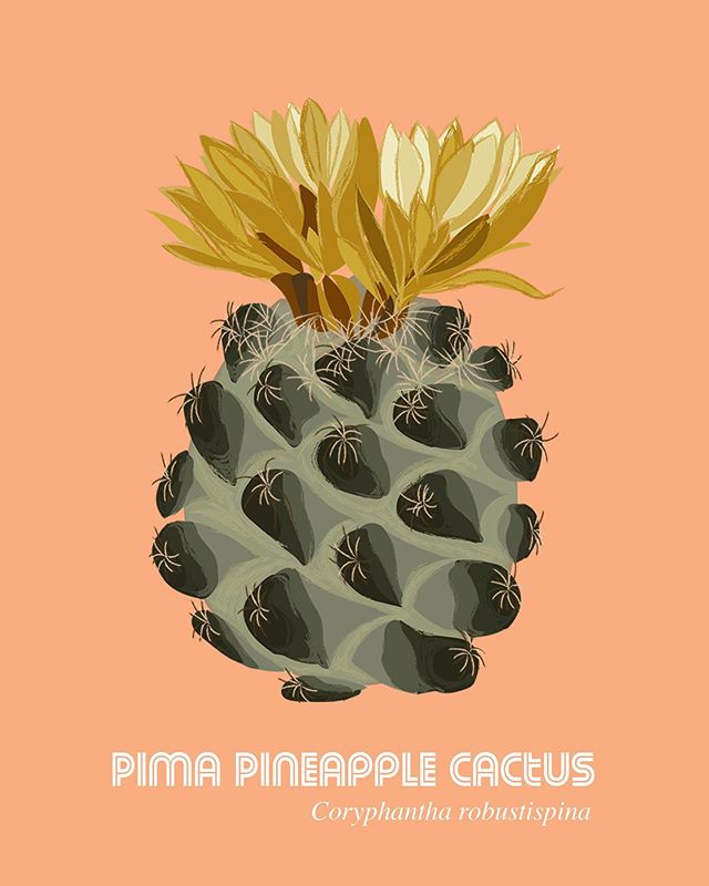 Is it a pineapple? Or is it a cactus?? It's a Pima Pineapple cactus that is native to Arizona, United States!! Illustration by: @koshabheda • • • • #illresearch #illustratedscience #environment #climatechange #history #zine #sciartist #webcomic #scicomm #scienceillustration #marinebiology #sciart #molecularbiology #cellularbiology #wildlifeconservation #naturalhistory #herpetology #herpetologist #amphibians #climatescience #sealevelrise #scientificillustration #entomology