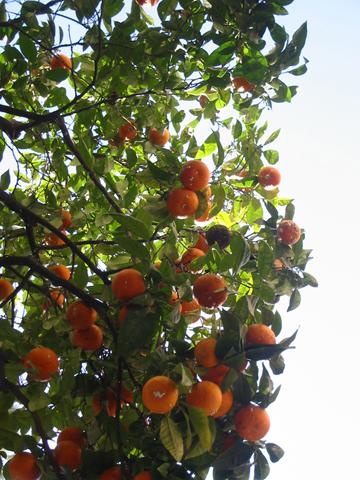orangesoversangria.jpg