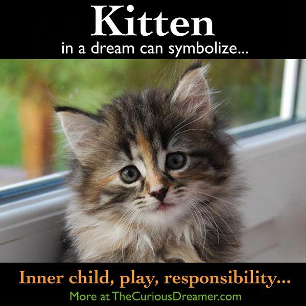 A kitten as a dream symbol can represent (as described at TheCuriousDreamer.com): Your inner child, playfulness, self-responsibility. The need to take more time for yourself, have more fun, and nurture yourself and your sense of play more... Read more at the #free dream dictionary on TheCuriousDreamer.com and in The Curious Dreamer's Dream Dictionary... . https://amzn.to/2Q3vOqJ . . . #dreams #dreammeaning #dreamsymbol #dreaminterpretation #dreamdictionary #symbolism #meaning #psychology #subconscious #sleep #sleeping #kitten #cat #kittens #play #playful #responsibility #self #fun #nurturing #innerchild #Kindle #book #selfhelp #selfhelpbook #learn #understand #improve