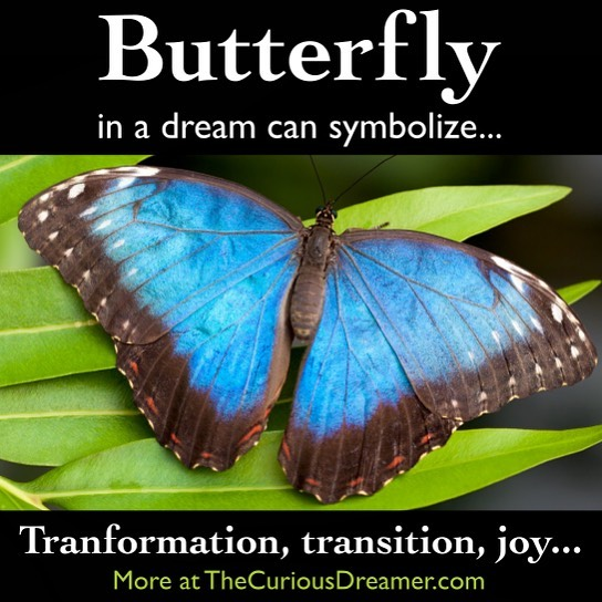 A butterfly in a dream can symbolize (as described at TheCuriousDreamer.com): Transformation, transition, phases; carefree joy. Perhaps you have come through a transition (as a caterpillar transforms into a butterfly), or perhaps transition is significant in your life right now. For more clues to meaning, pay attention to what it was doing or any particular characteristic that stood out. Read more at the #free dream dictionary on TheCuriousDreamer.com and in The Curious Dreamer's Dream Dictionary book on Amazon… . https://amzn.to/2Q3vOqJ . . . #dream #dreamanalysis #dreamsymbol #meaning #dreamdictionary #dreams #dreamwork #symbol #psychology #transition #transformation #change #transform #personalgrowth #better #improve #release #letgo #paperback #Kindle #book #dreambook #butterfly #butterflies #joy #pretty #beauty