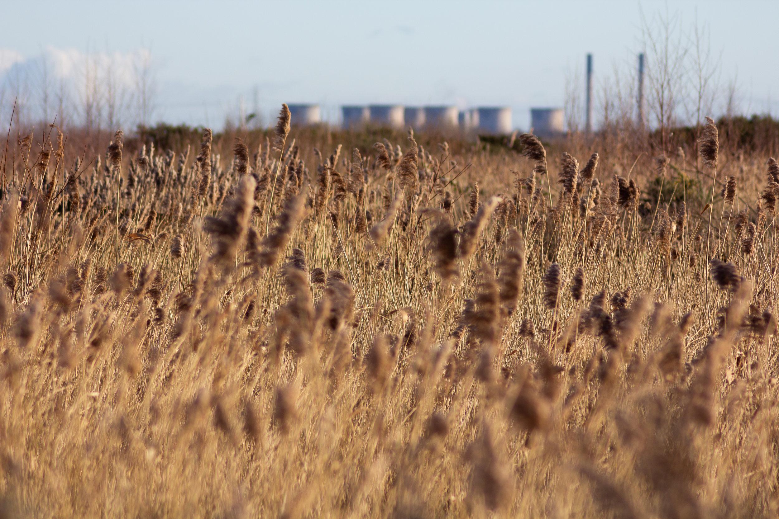 Ferrybridge Power Station through Reeds