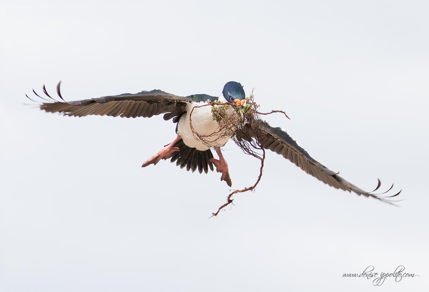 _D2A4017Bleaker-Island,-Falklands.jpg