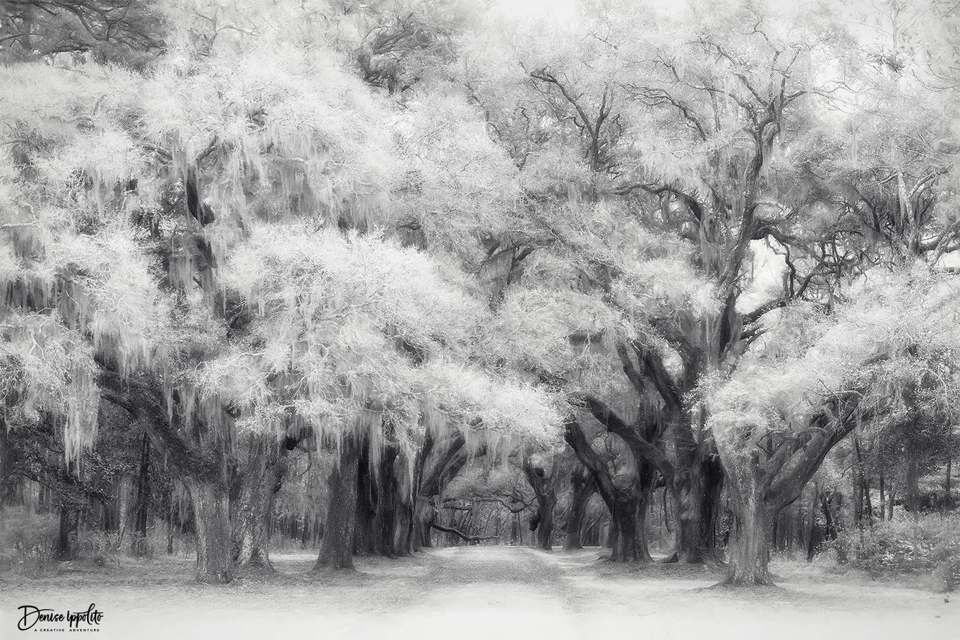 Infrared Conversion + Topaz Impression