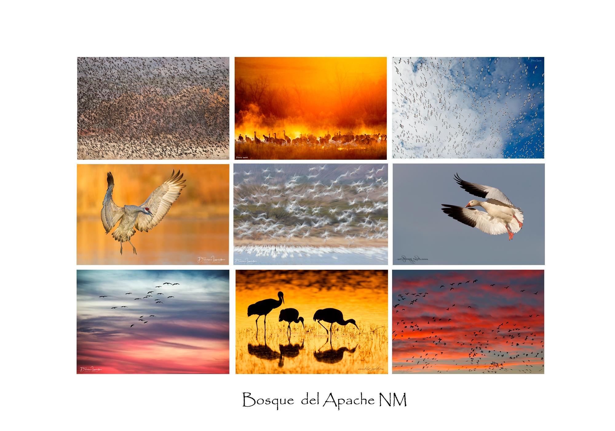 Bosque-del-ApacheNM.jpg