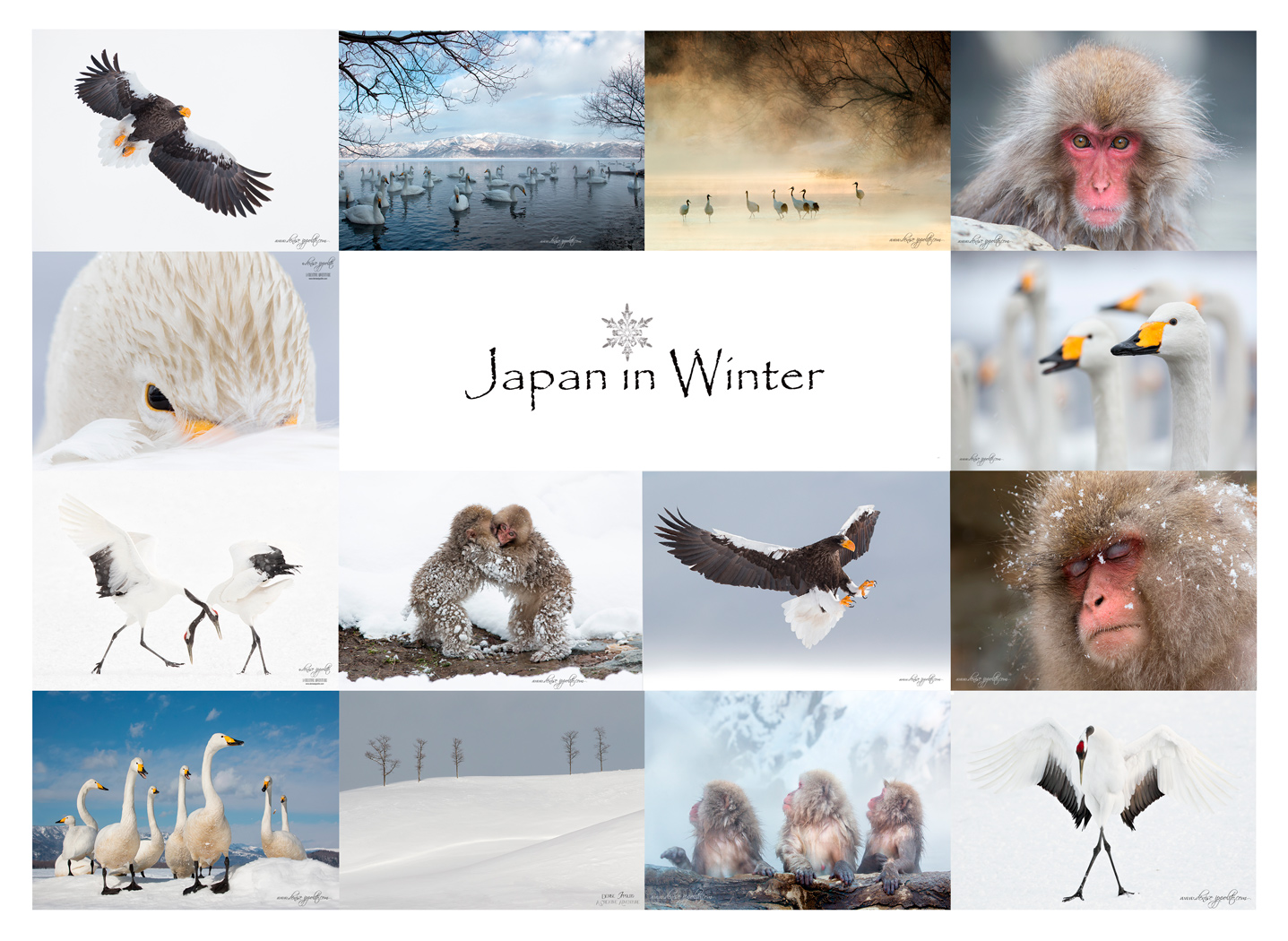 Japan-in-Winter.jpg