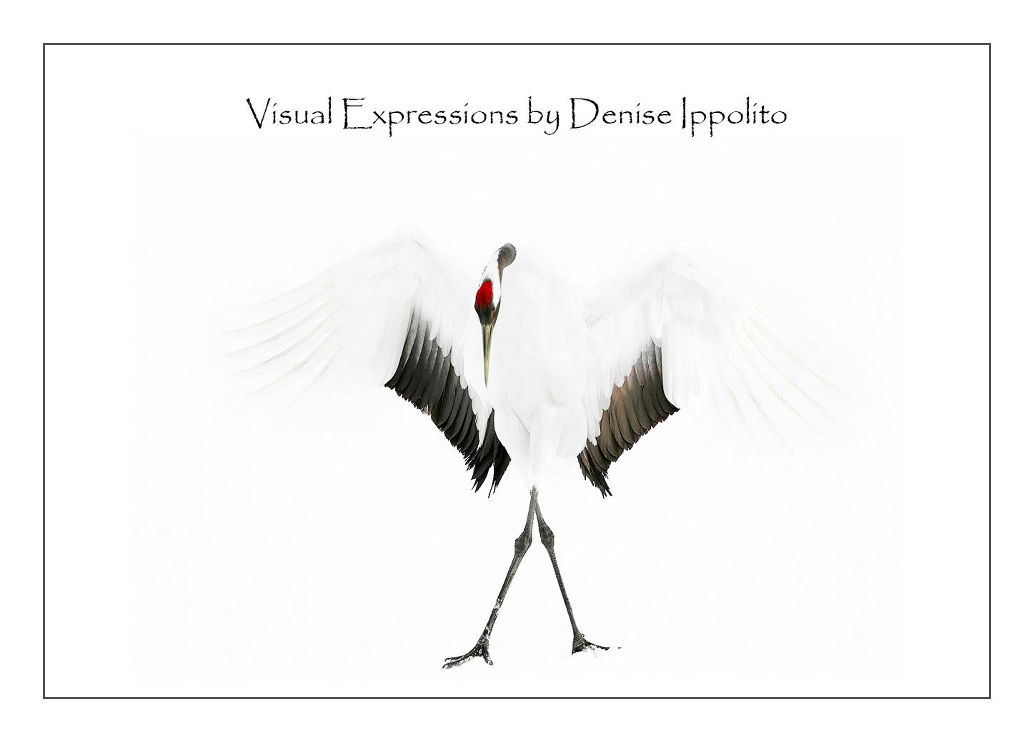 Visual-Expressions.jpg