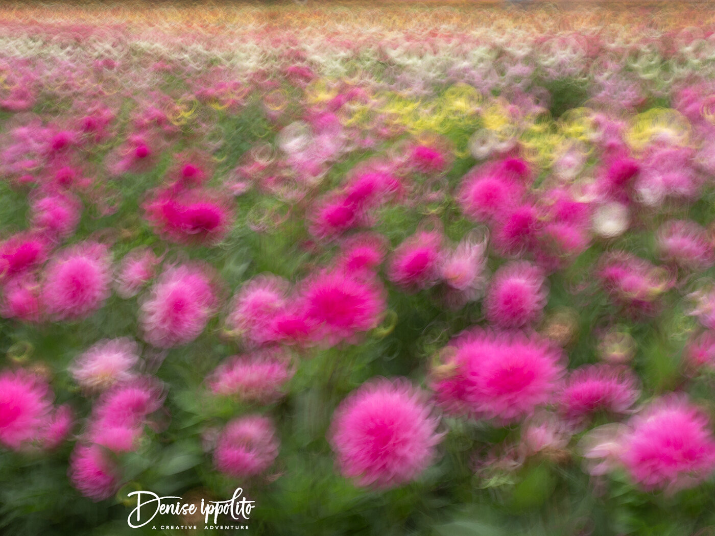 In-camera blur at 1/4 sec at f/22