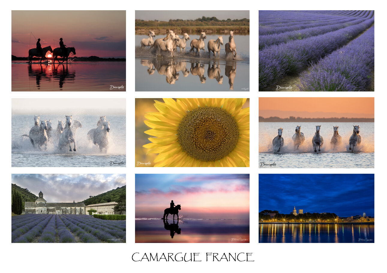 Camargue.jpg