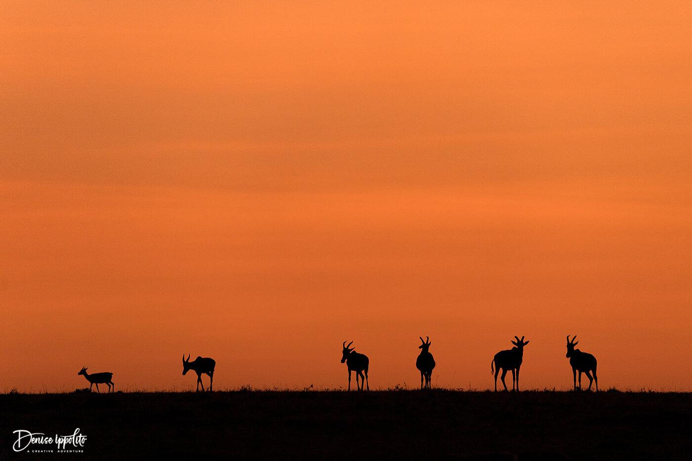 Sunset on the Mara, nothing beats it!