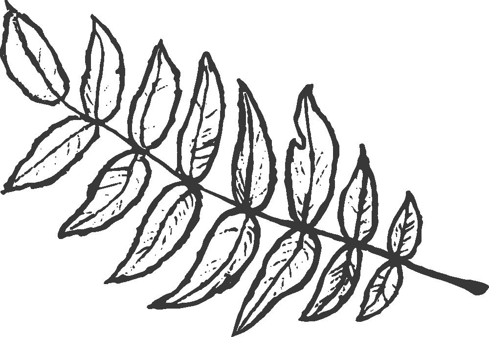 leaf.left.black.png