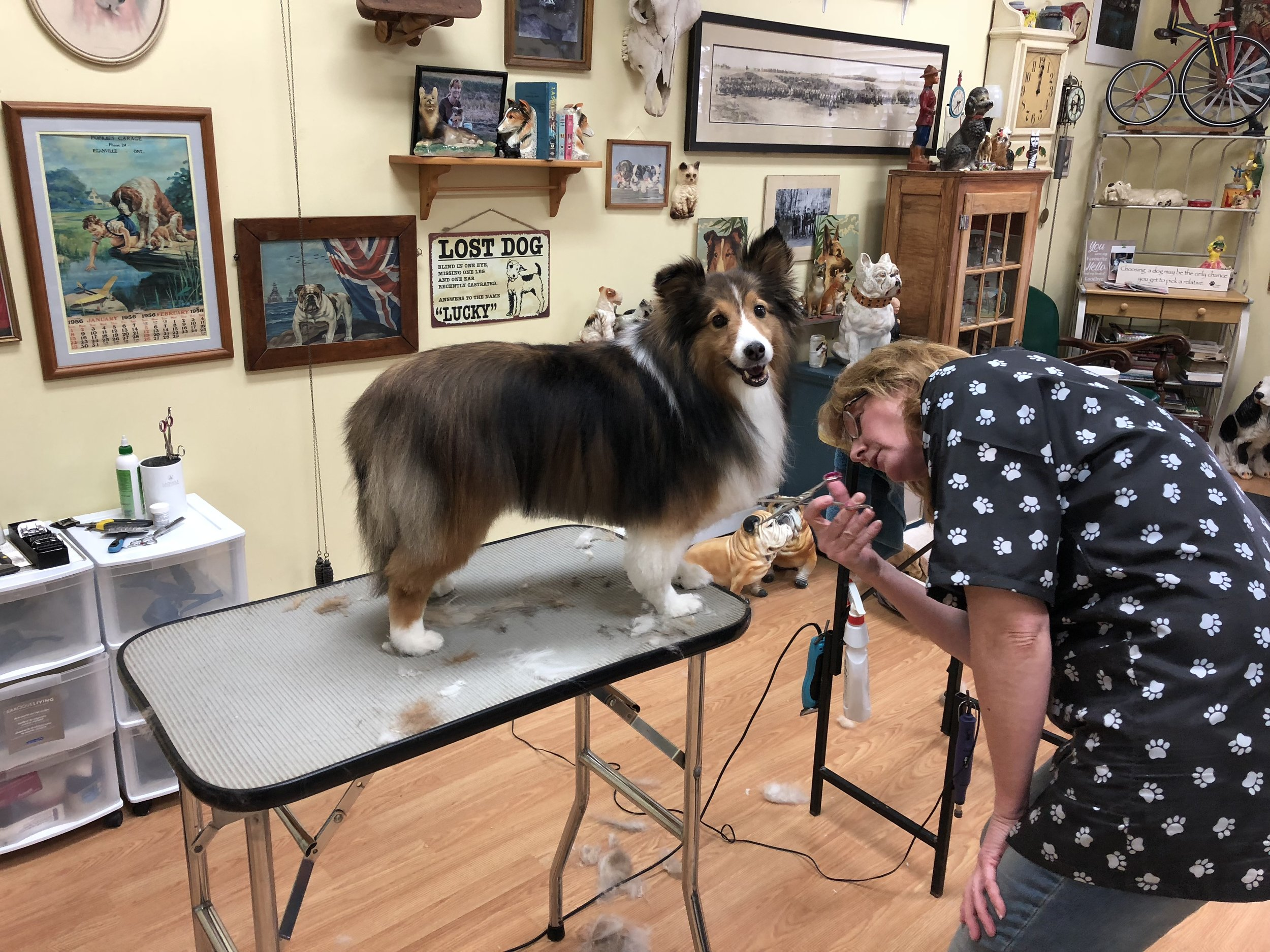 Jane, Head Groomer, has over 30 years experience as a groomer.