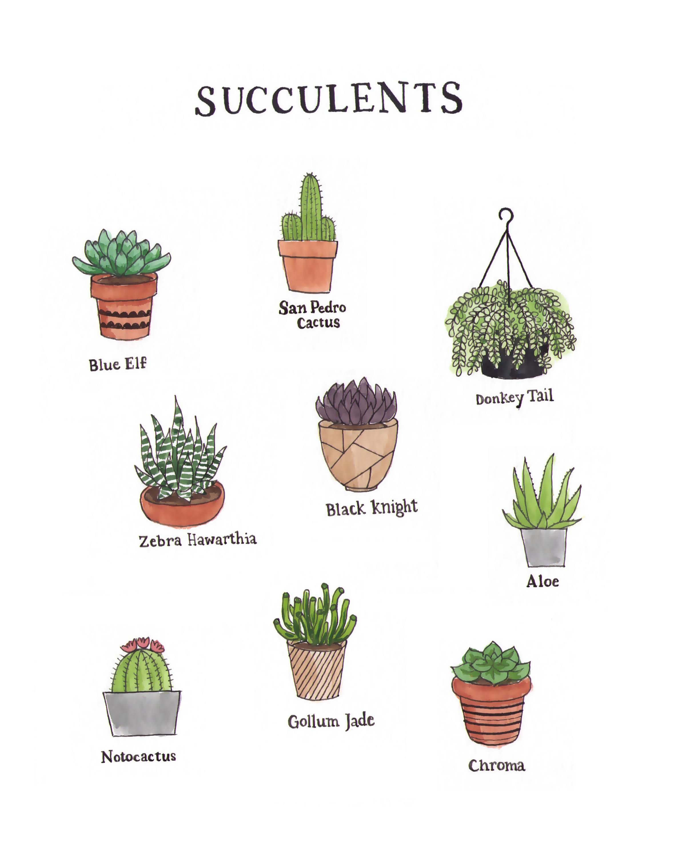 Succulent Print-01.png