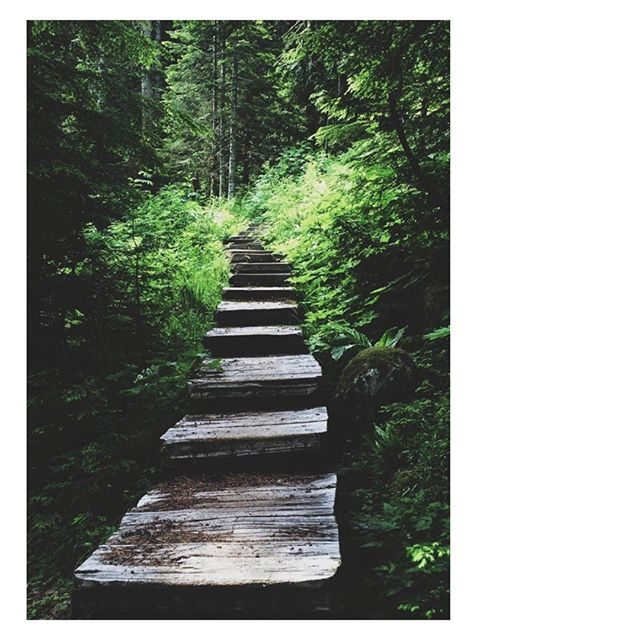 Follow the path that looks best to you.⠀⠀⠀⠀⠀⠀⠀⠀⠀ ⠀⠀⠀⠀⠀⠀⠀⠀⠀ 📸@julesgallowayhealth