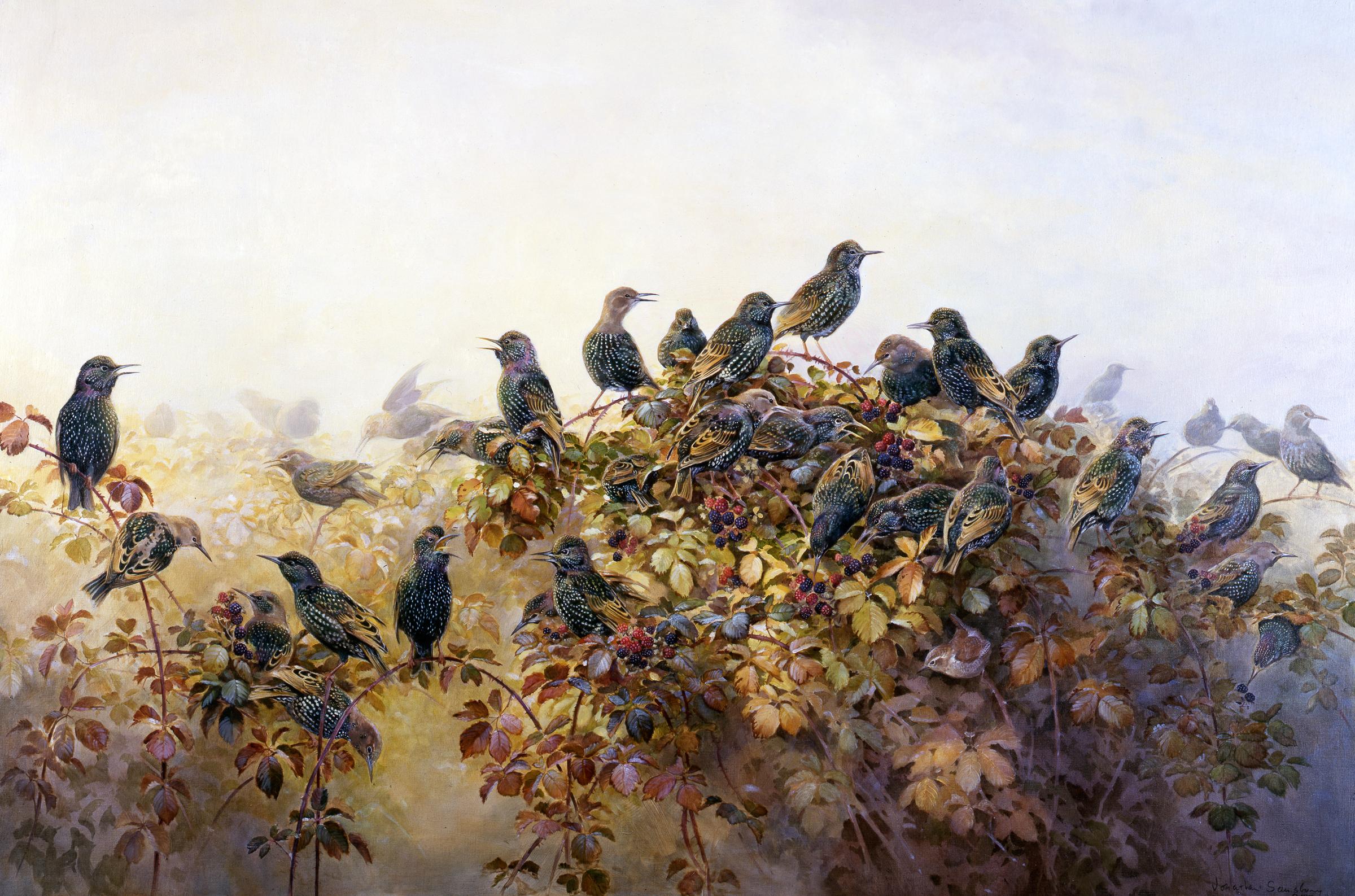 Jonathan Sainsbury, Starlings and Brambles