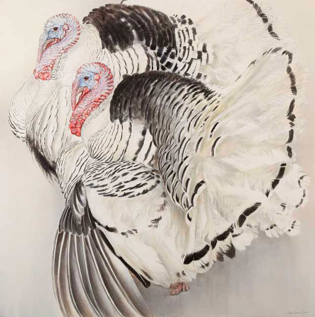 Pied Turkeys, watercolour and charcoal, 34 inches square