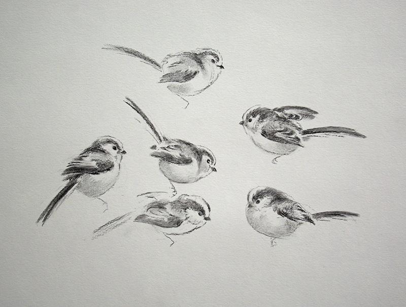 Jonathan Sainsbury, long-tailed tits, charcoal drawing,