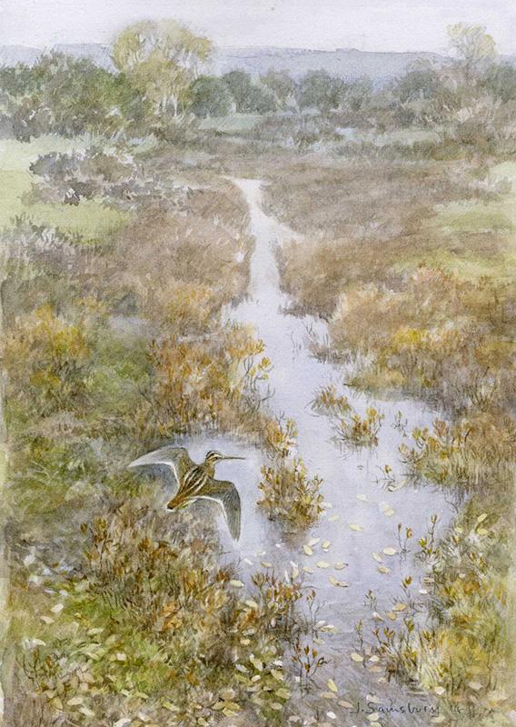 Jonathan Sainsbury, Snipe, watercolour, paper, miniature