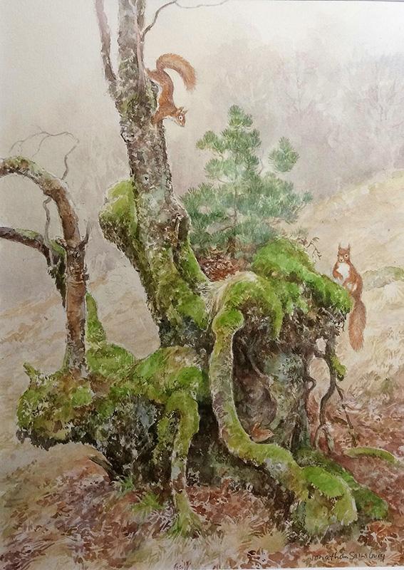 Jonathan Sainsbury, red squirrels, watercolour