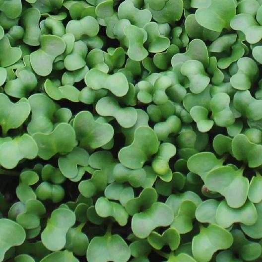 Discover Microgreens - A nearly perfect superfood
