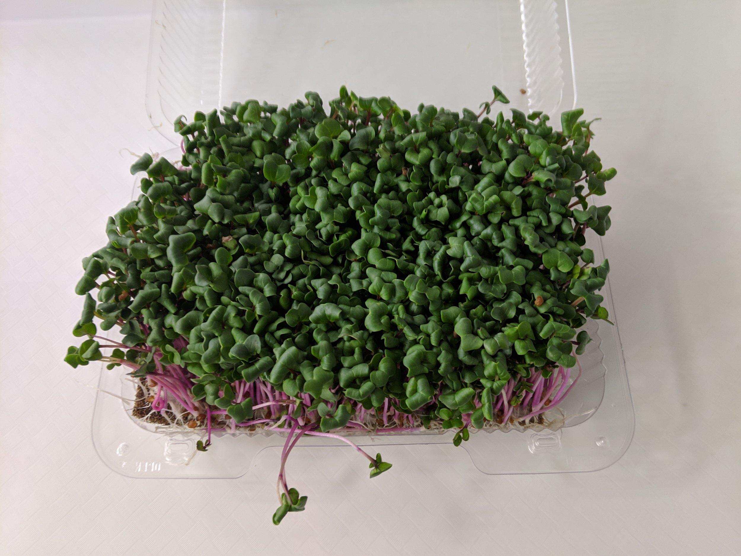 Fresh, Living Microgreens! -
