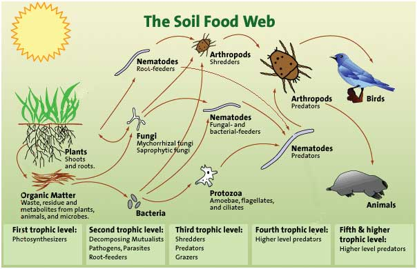 Digram from the soil food web institute