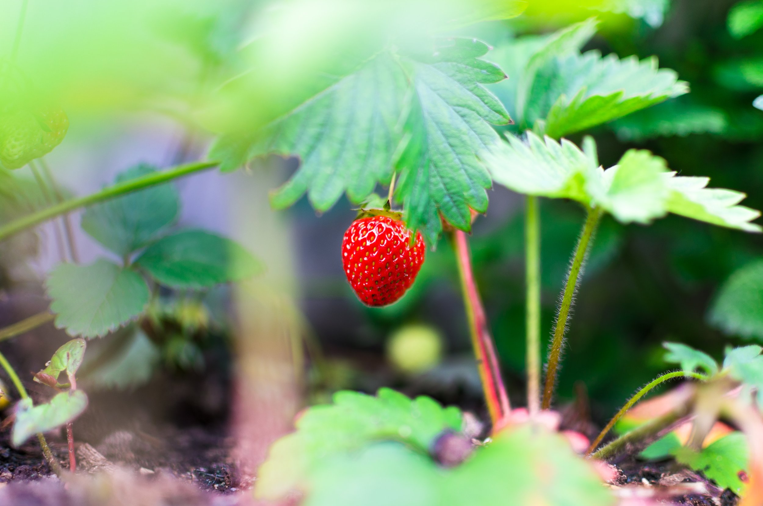 agriculture-blur-color-298694.jpg