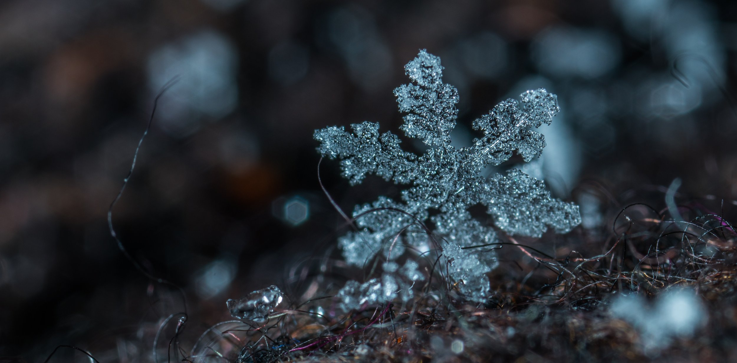 blur-close-up-cold-813870.jpg