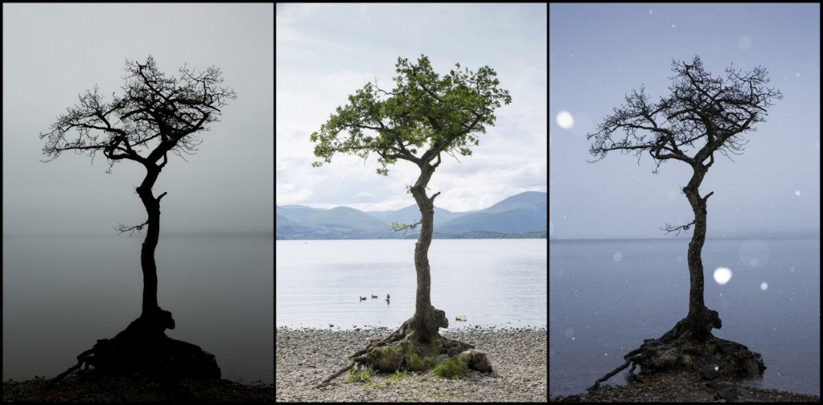 tree triptych copy.jpg