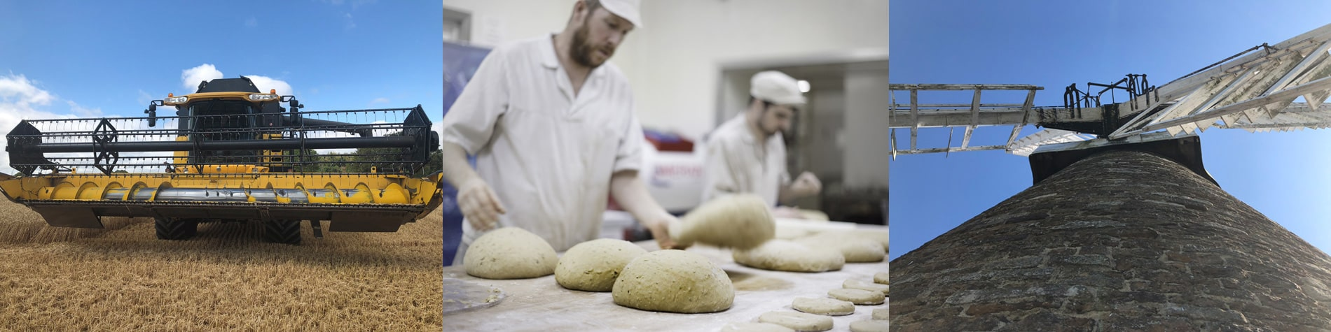 hambleton-bakery_science_healthy-loaves.jpg