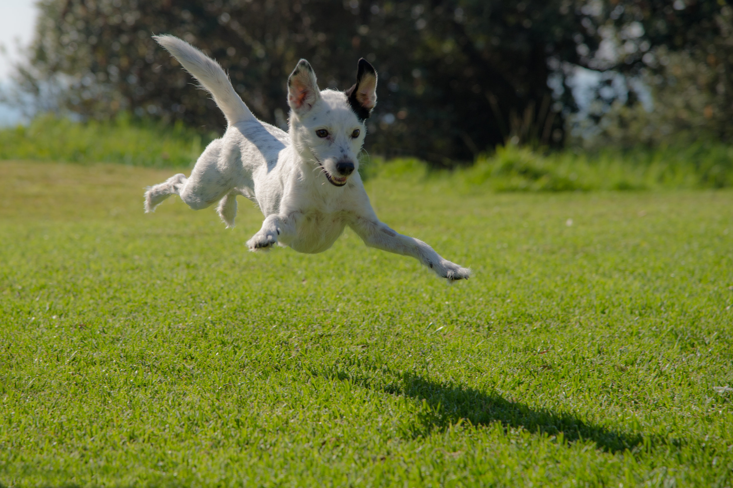 DOG PARK -