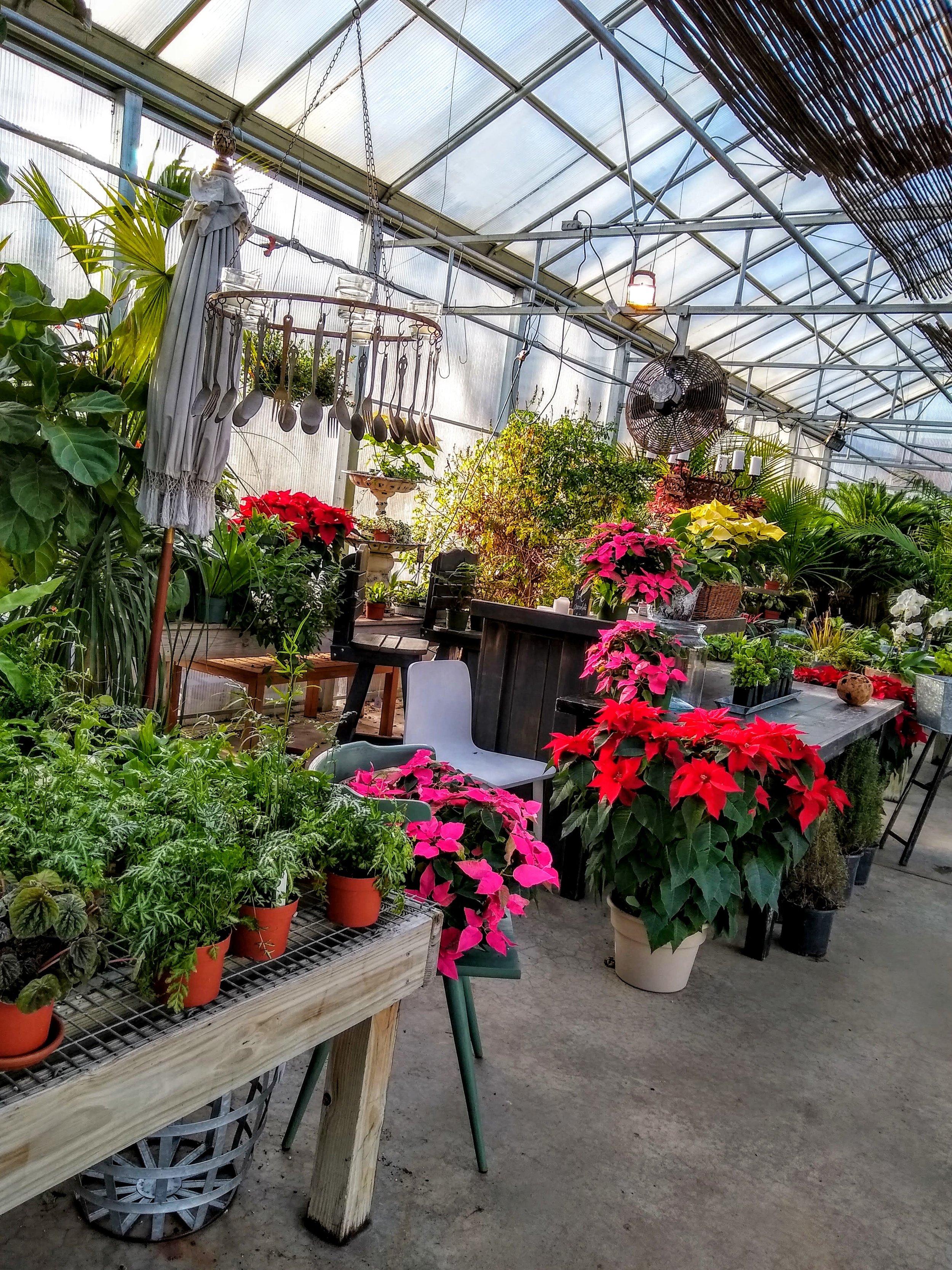 Herbary-Greenhouse-1.jpg