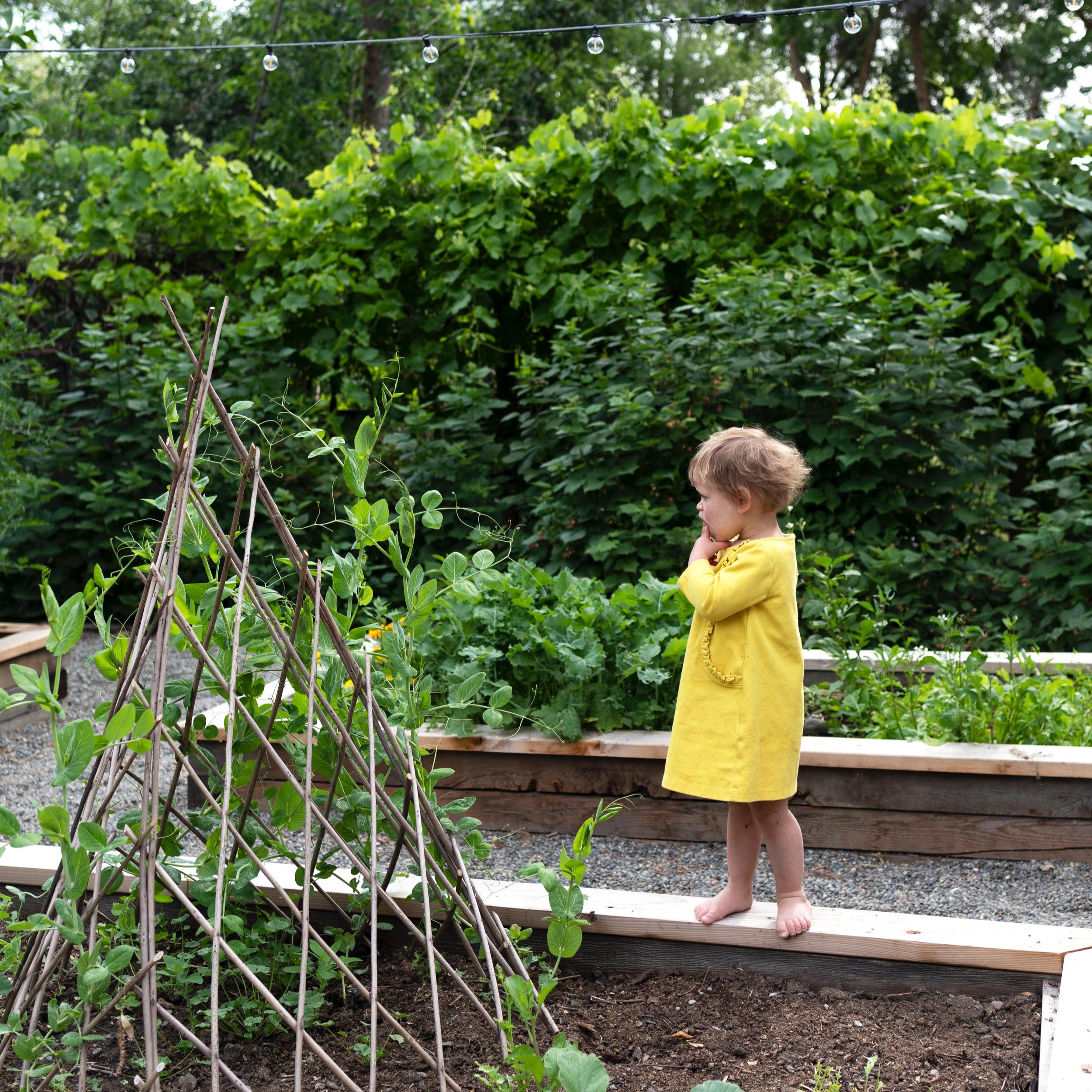 The+Grit+and+Polish+-+Farmhouse+Garden+Daphne+4.jpg