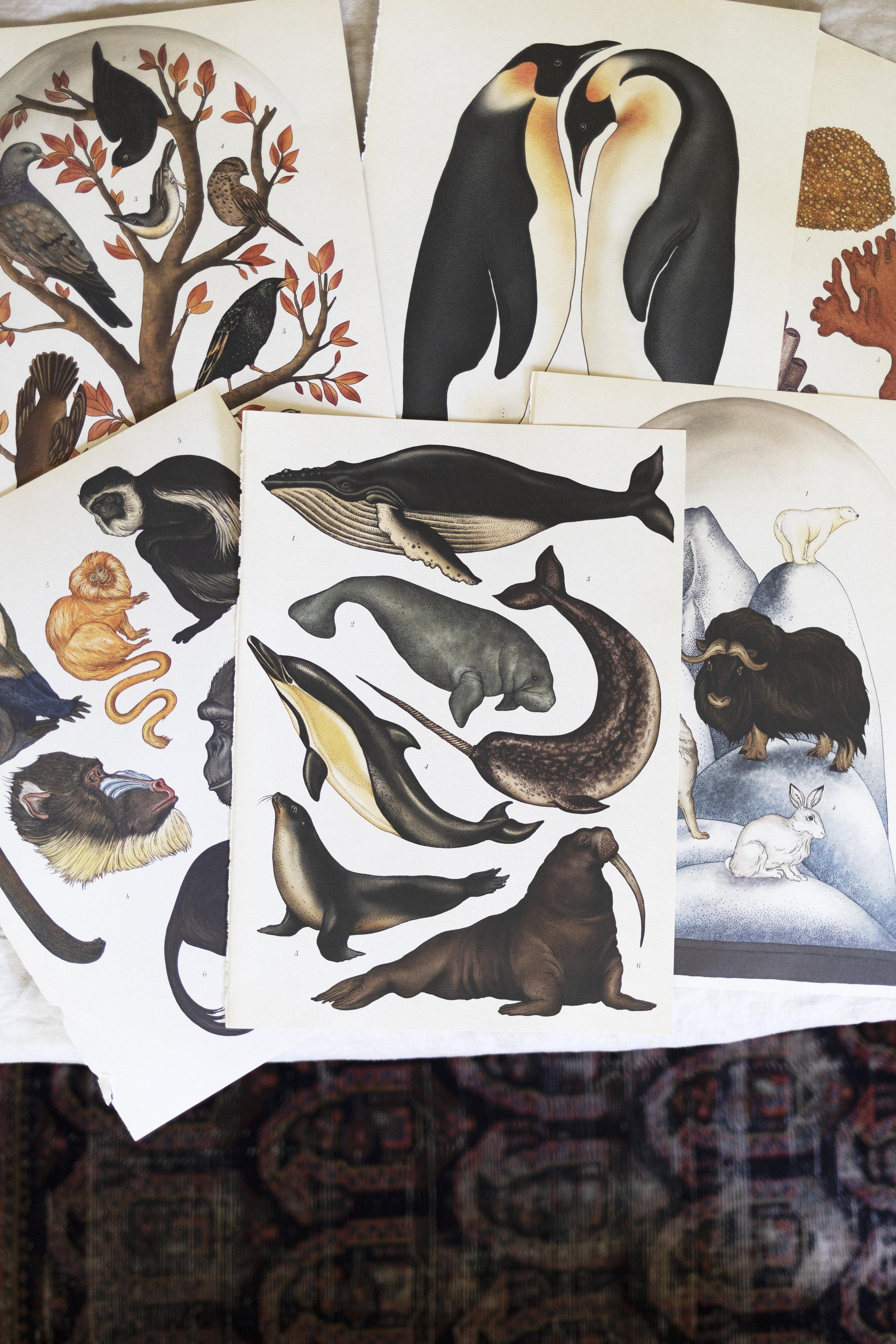 The Grit and Polish - Farmhouse Boys Bedroom Animalium Art 23.jpg