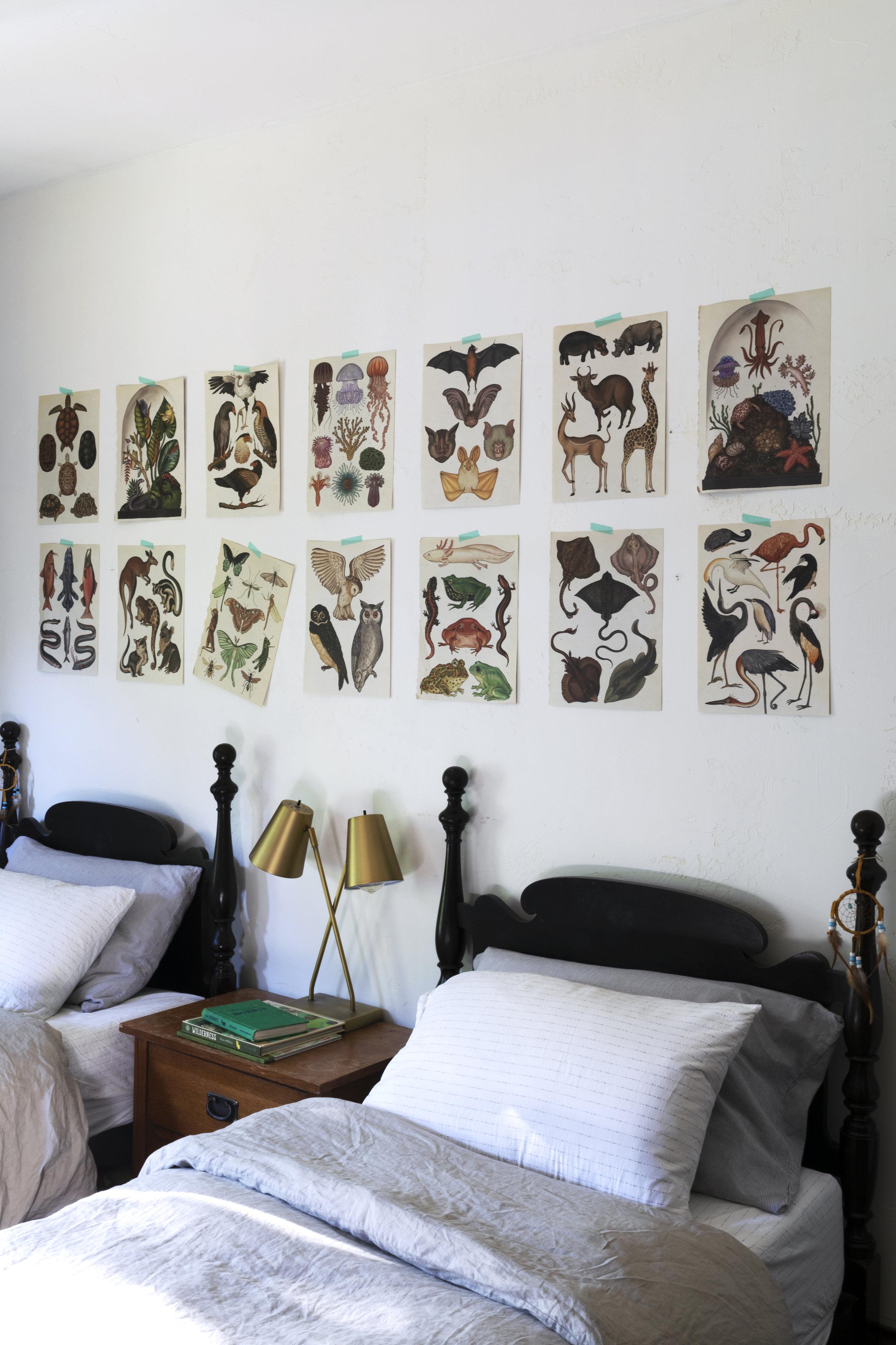 The Grit and Polish - Farmhouse Boys Bedroom Animalium Art 6.jpg